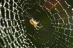 Spiders that are fed with graphene produce silk that's five times stronger and can carry a human #science #tech #technews