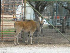 Exotic Resort Zoo Johnson City, Tx <3