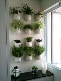 растения в кашпо на стене - Поиск в Google