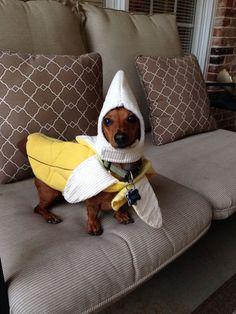 Dachshund banana costume