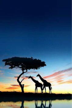 janetmillslove: African Sunset - gir moment love