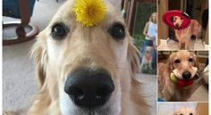 17 Nice People Who Just Want You To Look At Their Dog