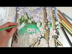 Magical Jungle: Tropical Paradise - Part 1 | Adult Coloring Book by Johanna Basford - YouTube