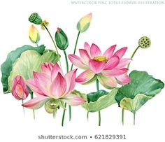 Find Pink Lotus Border Watercolor Botanical Illustration stock images in HD and millions of other royalty-free stock photos, illustrations and vectors in the Shutterstock collection. Watercolor Lotus, Lotus Painting, Watercolor Flowers, Botanical Drawings, Botanical Prints, Lotus Flower Art, Plaster Art, Floral Drawing, Pink Lotus