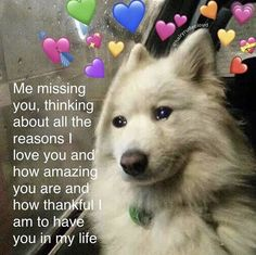 Tag someone youre missing rn (tags: ) Cute Love Memes, Funny Love, Sweet Quotes, Cute Quotes, Friendship Memes, Wholesome Pictures, Reasons I Love You, Lesbian Quotes, Soulmate Love Quotes