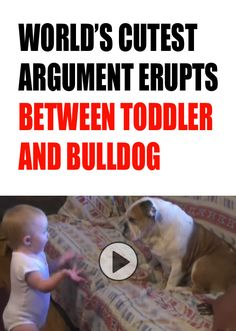 I can't even stand it. This is too cute!!! http://theilovedogssite.com/cutest-argument-ever-erupts-between-toddler-and-english-bulldog/