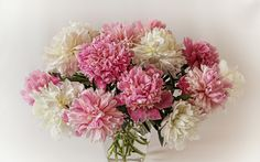 peonies background wallpaper - Google Search