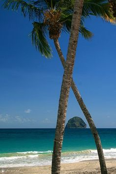 A photograph of a beach in Martinique, the Carribean. The photograph demonstrates how little one needs to be enticed by such a place. The beach, palm trees, and water are enough to attract anyone.