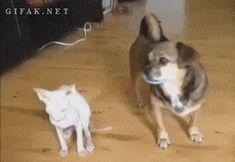 Os 47 melhores GIFs de cachorro de 2013