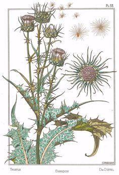 53 ideas for jewerly art nouveau irises Brain Illustration, Art Nouveau Illustration, Zentangle, Art Nouveau Tattoo, Mughal Paintings, Leaf Drawing, Garden Journal, Bird Wallpaper, Maurice