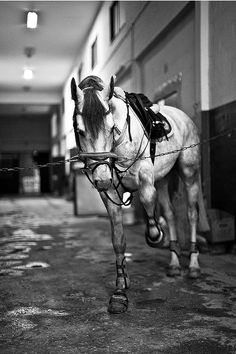 want this shot of my impatient horse  ;)