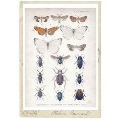 Juliste perhoset & kuoriaiset, 70 x 50 cm