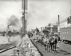 "New Orleans, Louisiana, circa 1903. ""Mule teams on the levee."" 8x10 inch dry plate glass negative, Detroit Publishing Company."