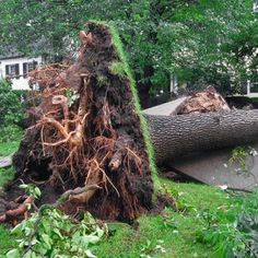 As we head into another PNW winter we know there will be stormy weather ahead. Call us for tree removal in Kirkland and Woodinville before disaster strikes. Aadams Landscaping & Restoration LLC 15936 Mink Road NE Woodinville, WA 98077 Phone: 425-844-9923