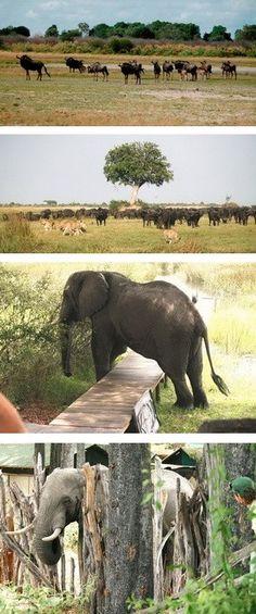 Wildlife Sightings at Duba Plains Camp in November 2012