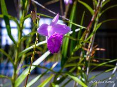 UPIS_FOTO_042016_ATIVIDADE 03_ORQUIDEA 1