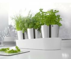 Design Shop, House Design, Wmf, Kraut, Little Houses, Indoor Garden, Planter Pots, Herbs, Landscape