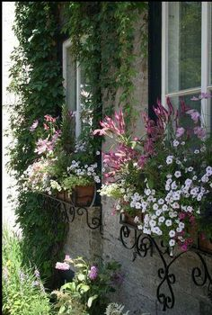beautiful window boxes
