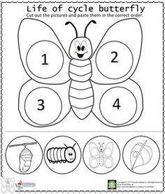 butterfly life cycle activity worksheet for preschools