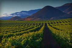 29 Best Edna Valley Images In 2020 Edna Valley Vineyard