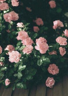 Imagen de flowers, rose, and pink