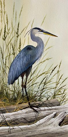 Wonderful watercolor of a heron!
