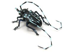 Asian Longhorn Beetle, glass insect by Wesley Fleming