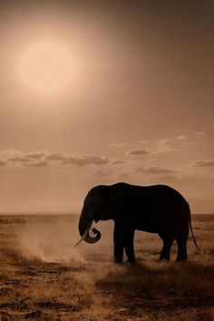 Elephant silhouette against the sun