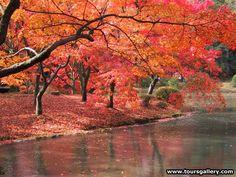 Google Image Result for http://www.toursgallery.com/Kyoto_botanic_garden.jpg