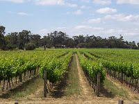 Mexican wines and wineries from Mexico: Mexican wines have improved