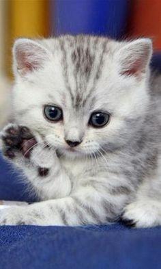 <3 kittens by mavis