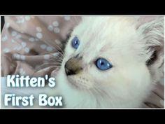初めて段ボールをゲットした子猫ちゃんのはしゃぎっぷりがかわいい!! - ねとらぼ