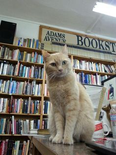 Bartleby at Adams Ave Books San Diego