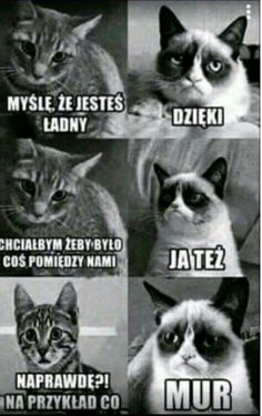 Nu i oke ^^ Wtf Funny, Hilarious, Funny Lyrics, Polish Memes, Funny Motivation, Funny Mems, Funny Video Memes, 3d Max, Grumpy Cat