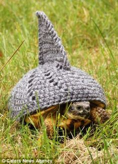 Now that's what you call a shell suit! Tortoise owner knits dozens of adorable outfits for her pets Cute Animal Memes, Funny Animal Pictures, Cute Animals, Turtle Clothes, Tortoise House, Tortoise Care, Red Footed Tortoise, Turtle Sweaters, Turtle Costumes