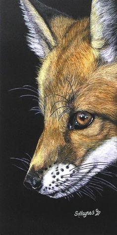 Tokala by Sandra Haynes, Scratchboard, 12 x 6 Wildlife Paintings, Wildlife Art, Animal Paintings, Animal Drawings, Art Drawings, Horse Drawings, Black Paper Drawing, Scratchboard Art, Fox Drawing