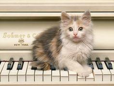 Piano playing kitty