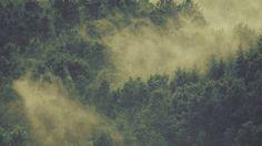 Wallpaper: http://desktoppapers.co/no22-forest-wood-fog-nature-green-mountain/ via http://DesktopPapers.co : no22-forest-wood-fog-nature-green-mountain