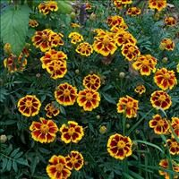 Select Seeds - Annual Seeds & Plants
