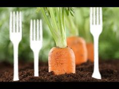 The main reason forks are used in the garden is to help prevent pests from roaming through. This helps to keep garden pests away from your vegetables. Growing Ginger Indoors, Home Vegetable Garden, Garden Yard Ideas, Family Garden, Tomato Plants, Rustic Gardens, Garden Pests, Egg Shells, Pest Control