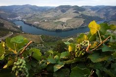 Douro Valley, Portugal   Jose Manuel Ribeiro / Reuters