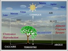 relation-cosmos-terre-plante Cosmos, Permaculture, Map, Knowledge, Relationship, Earth, Plant, Location Map, Universe