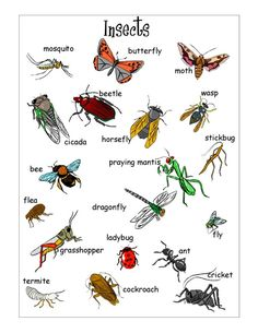 1000+ images about Bugs on Pinterest | Insects, Worksheets and Life ...