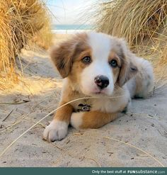 Any dogs and puppies that are cute. See more ideas about Cute Dogs, Cute puppies Tags: Cute Dogs And Puppies, Baby Dogs, Pet Dogs, Doggies, Tiny Puppies, Puppies Puppies, Havanese Puppies, Collie Puppies, Little Puppies
