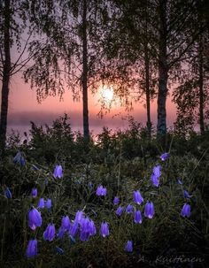 Kuittinen, in Finland The Beautiful Country, Beautiful Sunset, Beautiful World, Beautiful Places, Nature Images, Nature Pictures, Cool Pictures, Beautiful Pictures, Moon Garden