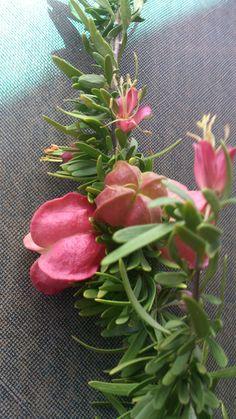 Klapperbos karoo plant Oudtshoorn Omgewing. Flower Art, South Africa, African, Garden, Nature, Flowers, Plants, Art Floral, Garten