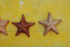 Photo: IslaMujeres SeaStar in Mexico