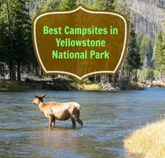Best Campsites in Yellowstone National Park. Have some fun traveling this summer on your road trip through some of Americas most exciting destinations. Camping Places, Camping World, Camping And Hiking, Outdoor Camping, Camping Cabins, Camping Gear, Camping Equipment, Outdoor Travel, Family Camping