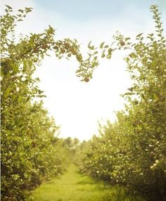 Nature Heart...