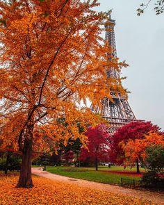 "20.9k Likes, 249 Comments - Hatice Korkmaz THE COLOR QUEEN (@kardinalmelon) on Instagram: ""Autumn in Paris mutlu haftasonlari #paris #france #eiffeltower"""